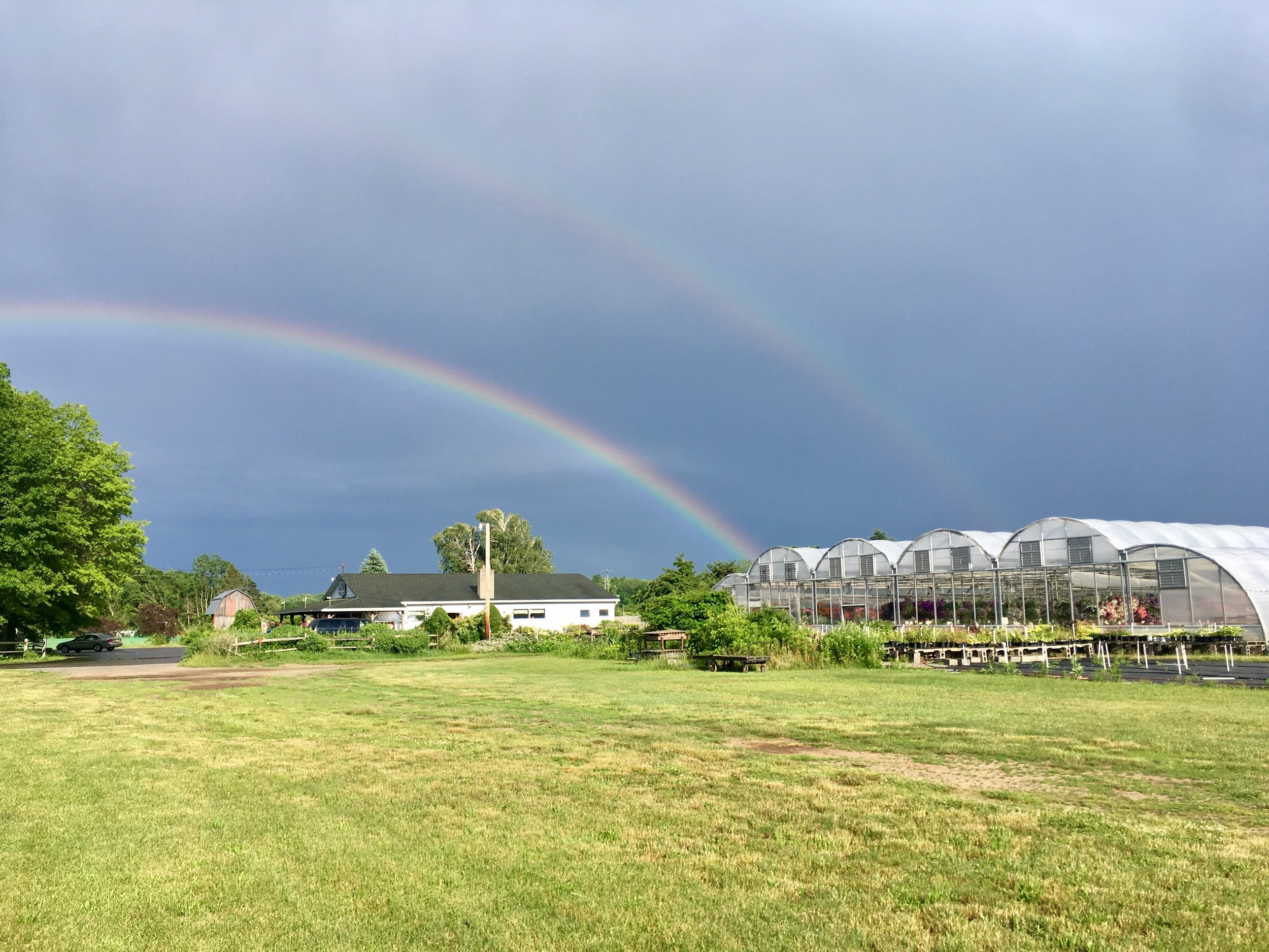 After all this rain, at least there is a bright side! I saw two rainbows in one day, and one of them was this beauty! A double rainbow all the way, right over our market and greenhouse.