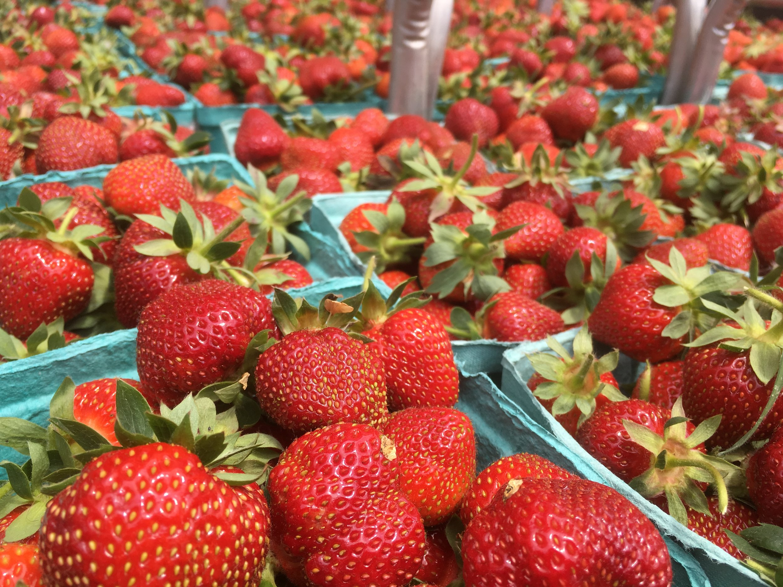 Fresh pick of the week: strawberries!!