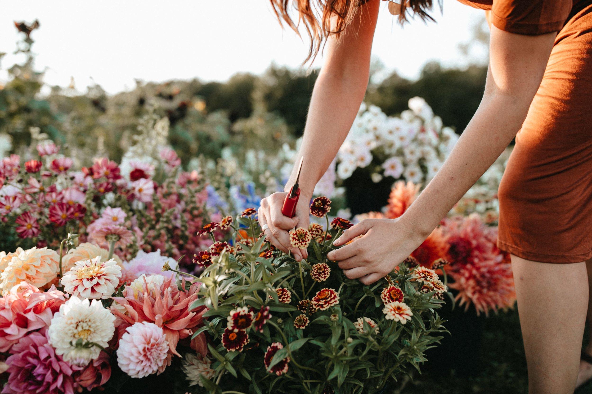 bouquetshare-min.jpg