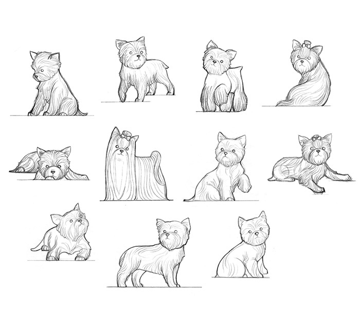 Animal study _ Yorkie