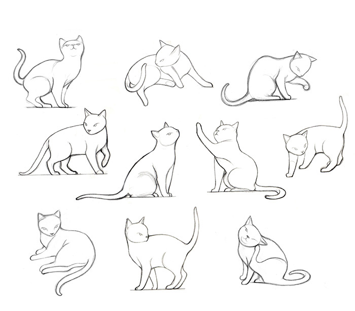 Animal study _ Cat