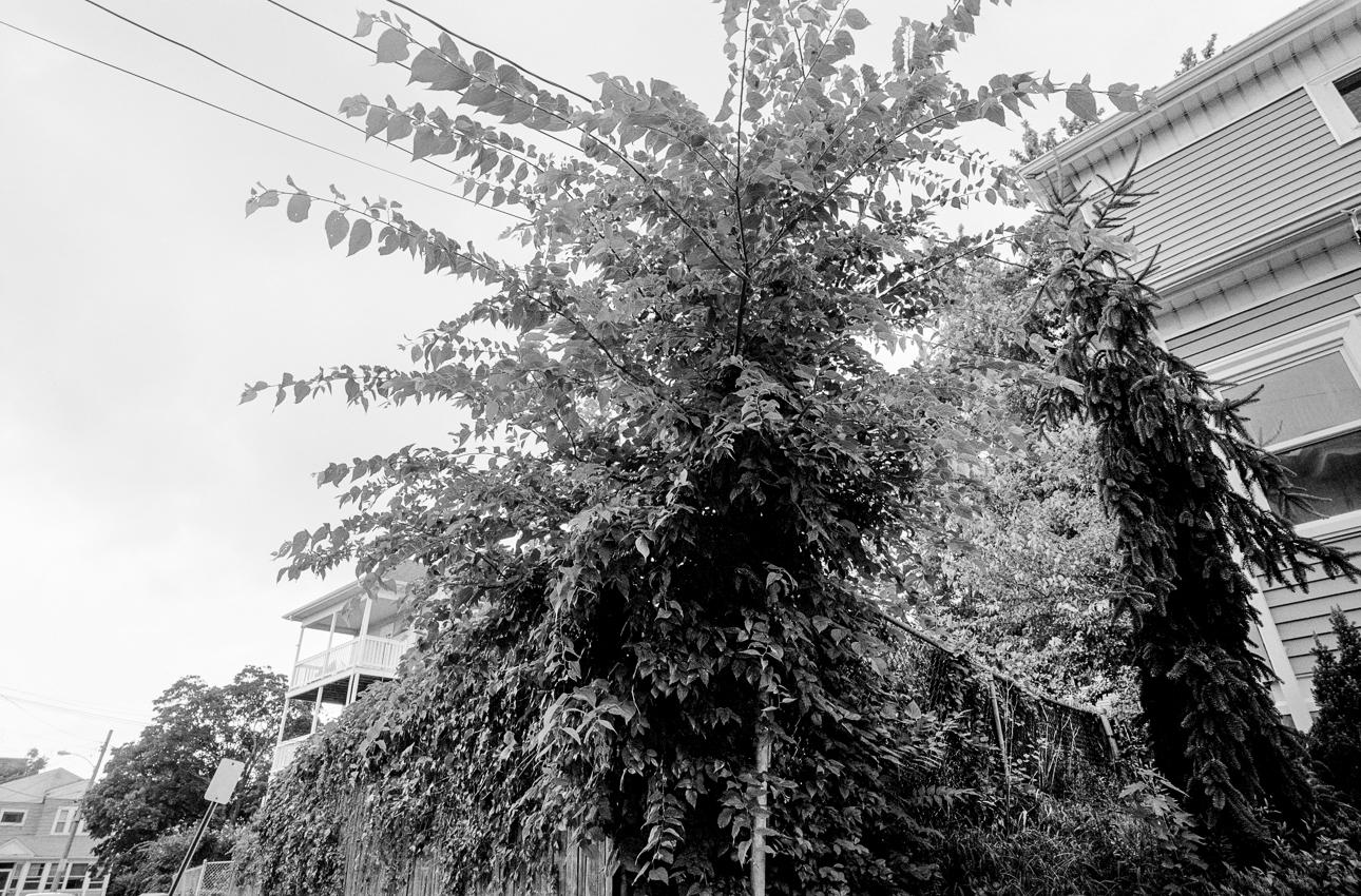 BL072013_08.jpg