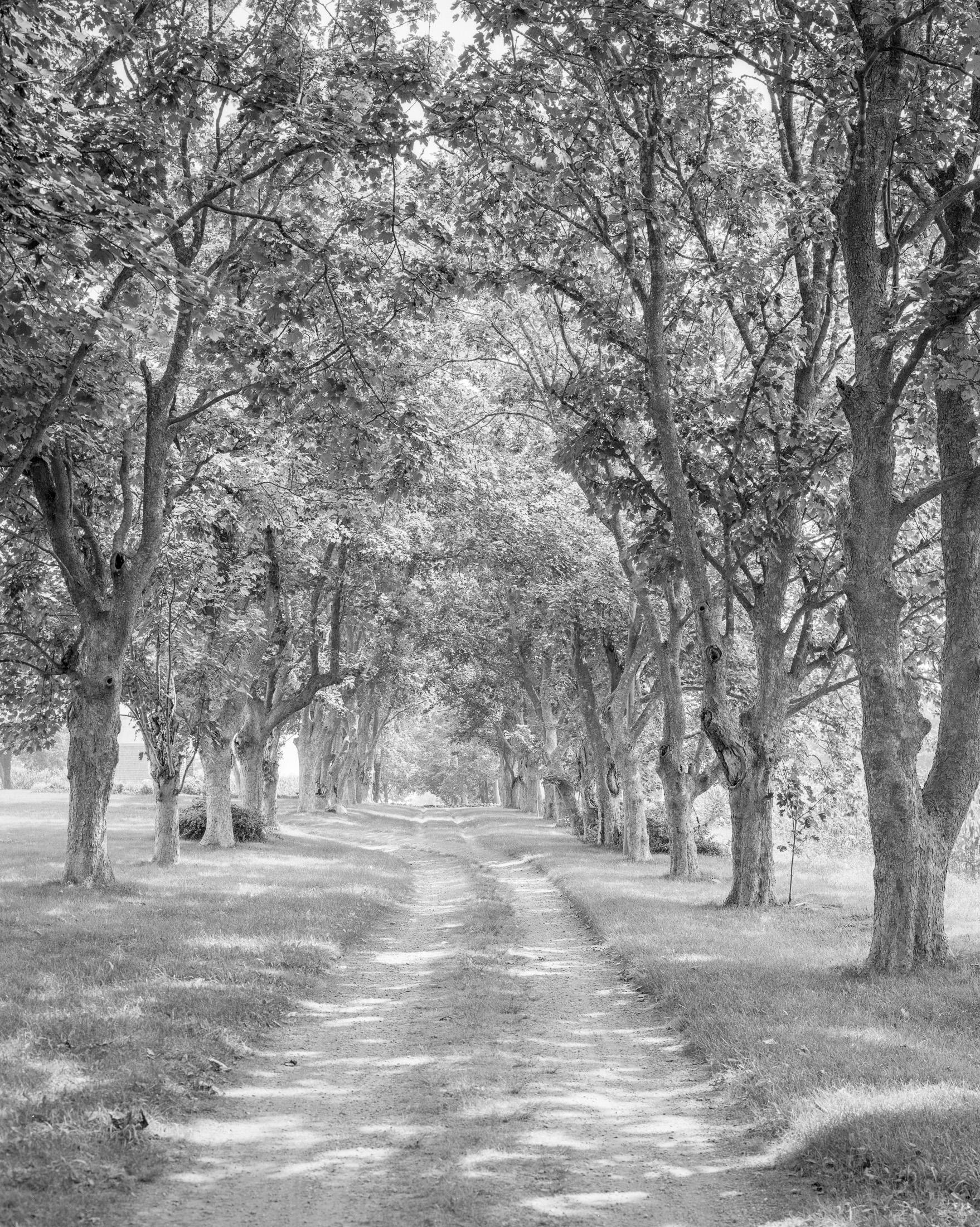 Trees_LC_45_93-Edit.jpg
