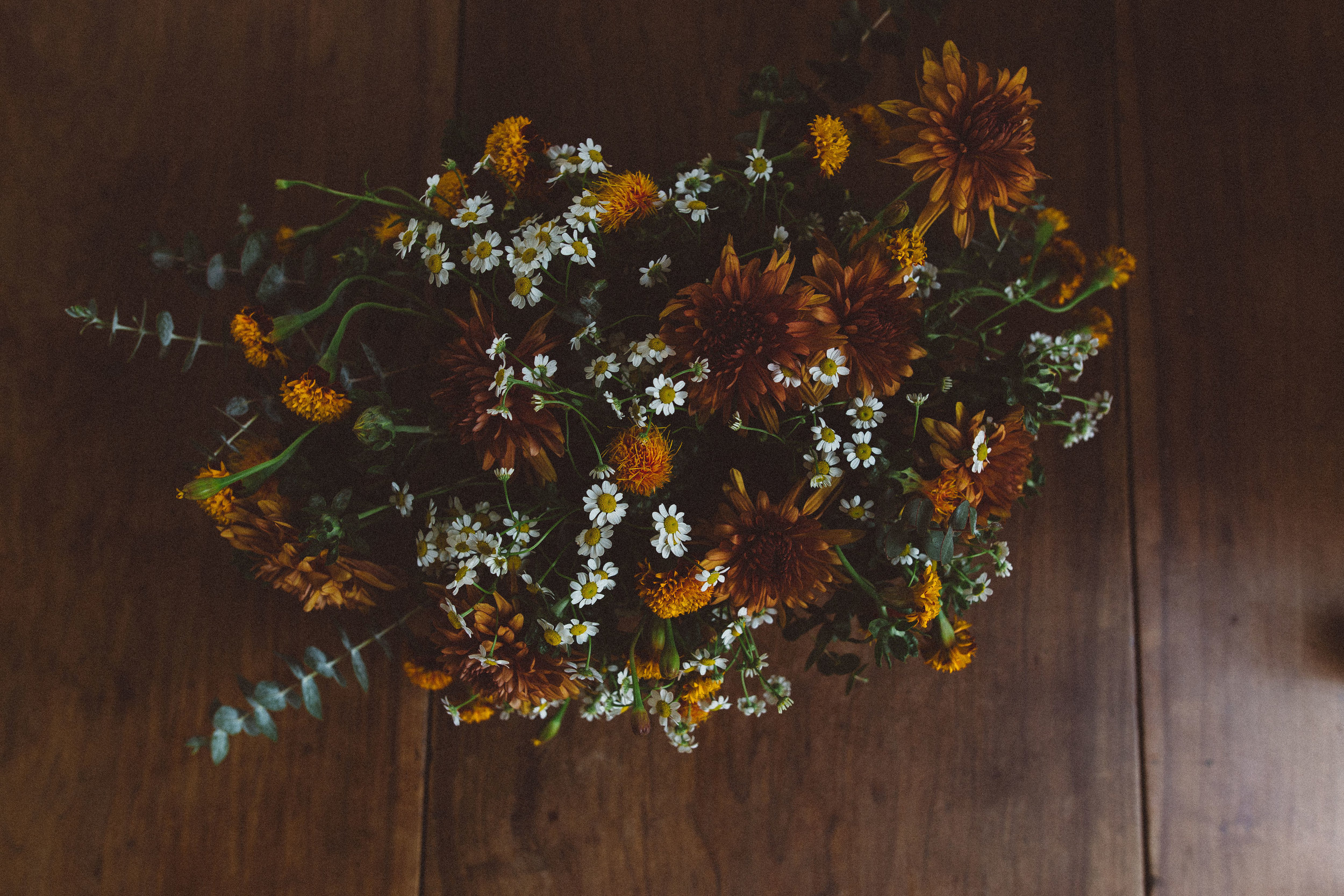 Your_Johnson_Flowers-8928.jpg