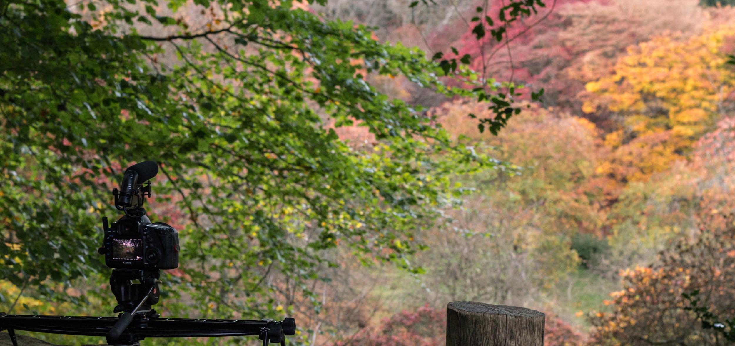 Abundant autumnal foliage scattered the landscapes hillsides.