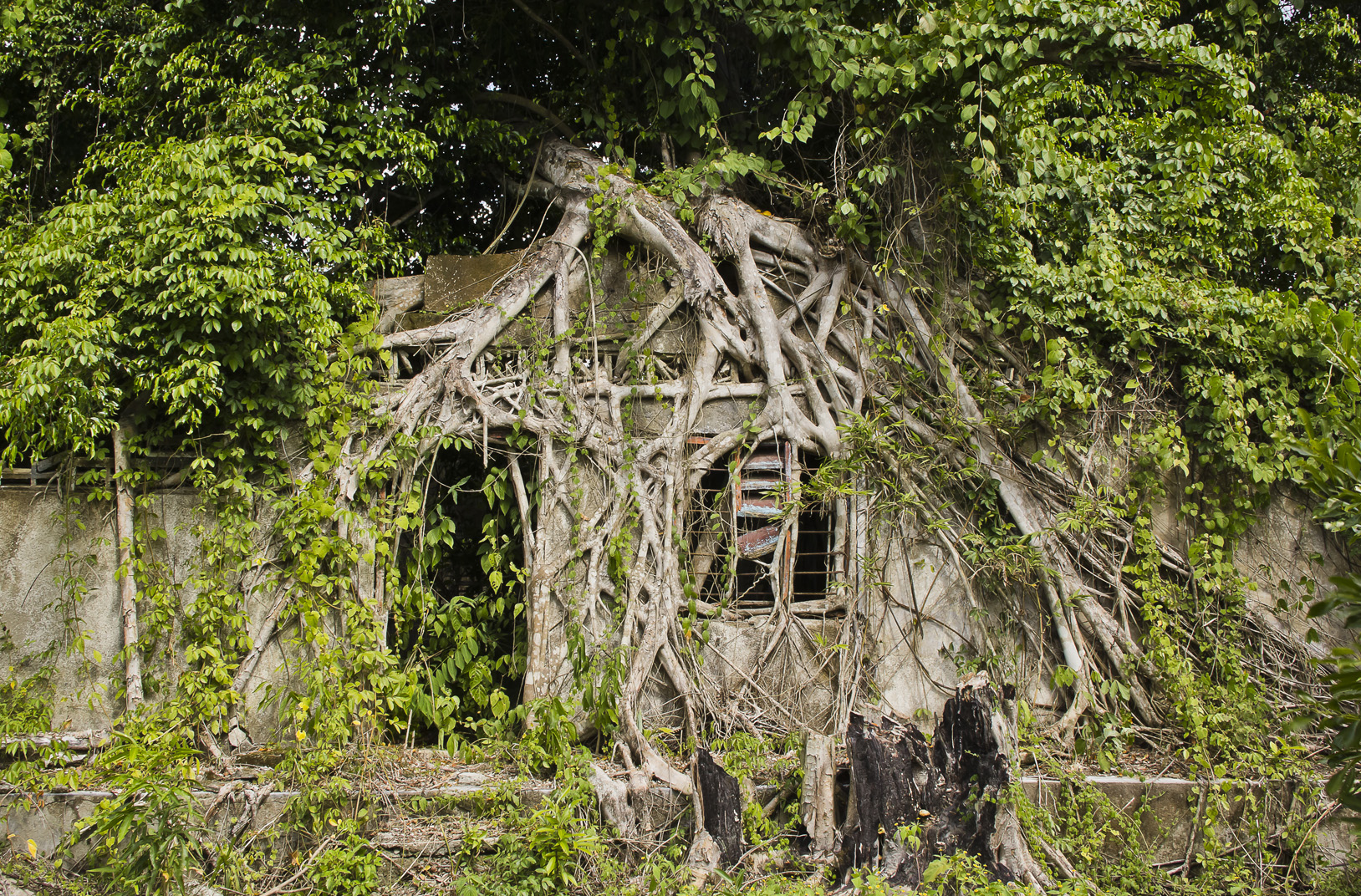 This photo represents the way nature is erasing traces of violence by taking over the physical remains of destroyed houses.