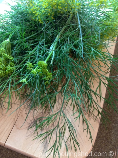 Dill on cutting board.jpg