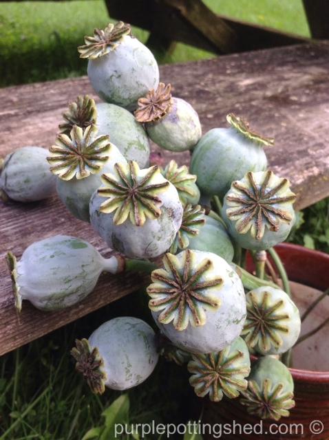 Peony poppy seed head bouquet.jpg