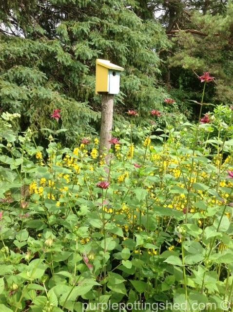 Birdhouse with loosestrife and beebalm.jpg