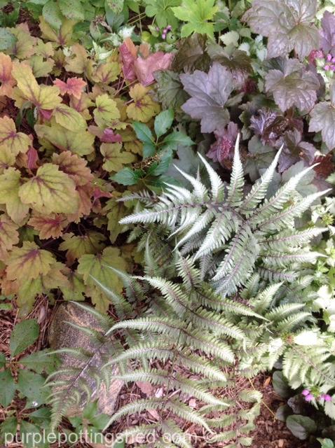 Coral bells, painted fern.jpg