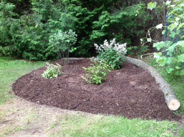New shrub bed, AFTER, perennials to come.jpg