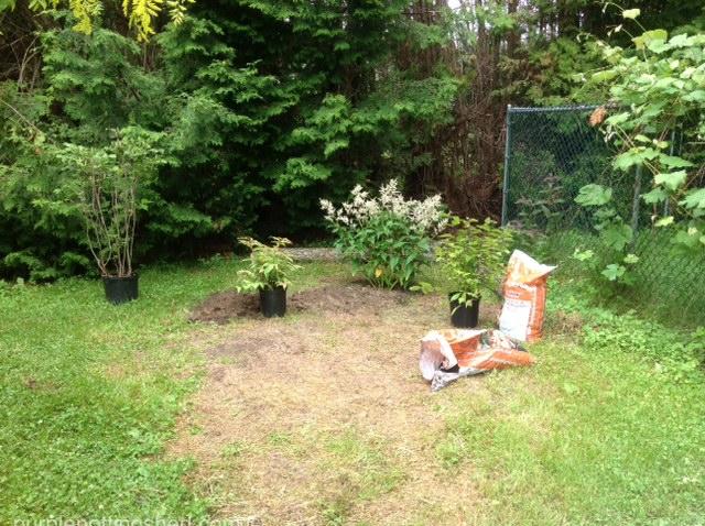 New shrub bed, BEFORE.jpg