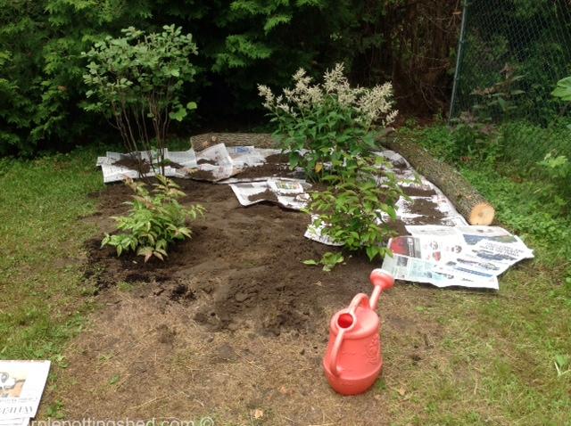 New shrub bed, shrubs planted, newspaper going down.jpg