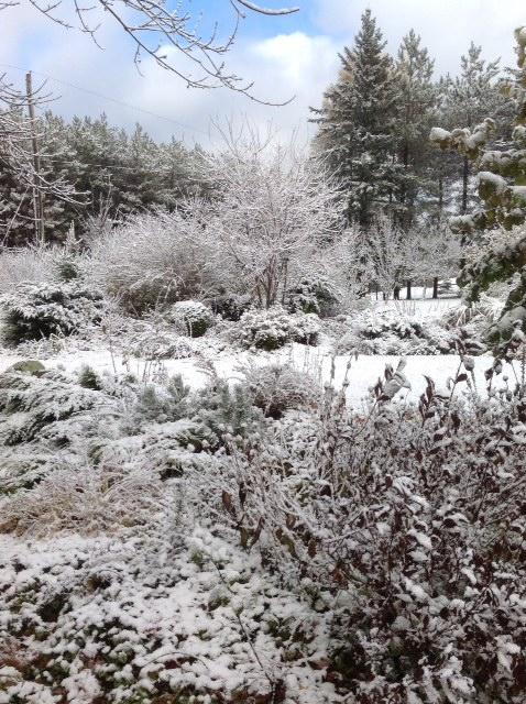 Snow on front garden