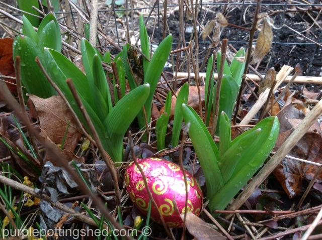 Allium shoots and egg.jpg
