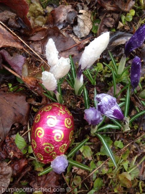 Egg and white crocus.jpg