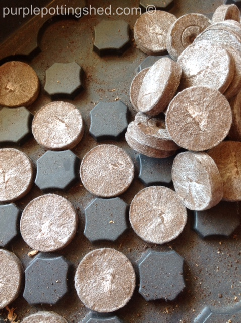 Peat pellets, dry.jpg
