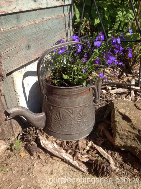Teapot with lobelia.jpg
