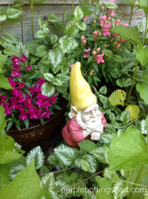 Gnome with snap dragons.jpg