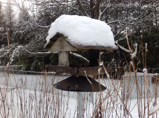 Bird feeder layered with ice & snow.jpg