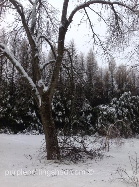 Branches down.jpg