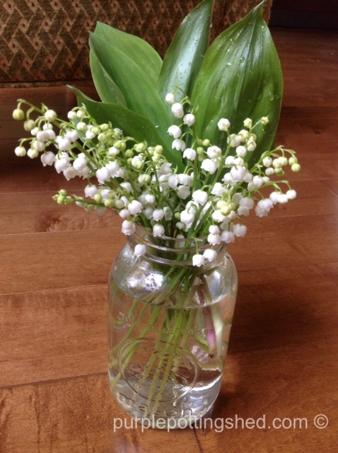 Lily of the valley in mason jar.jpg