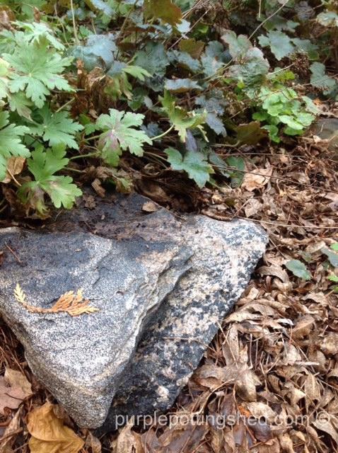 Speckled rock.jpg