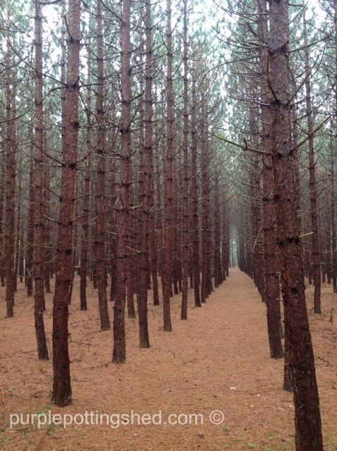 Path amongst rows.jpg