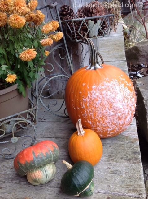 Pumpkin with snow.jpg
