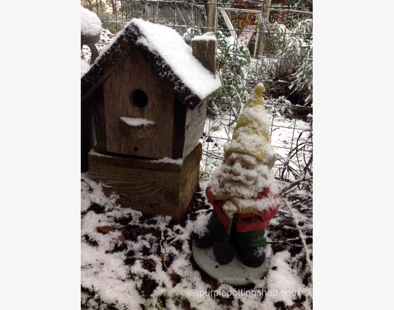 Gnome with snow