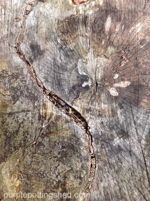Chunk of wood.jpg