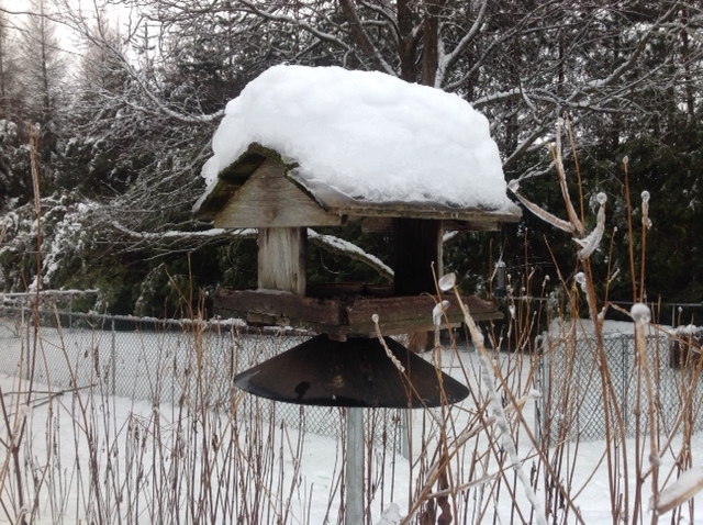 Bird feeder, winter.jpg