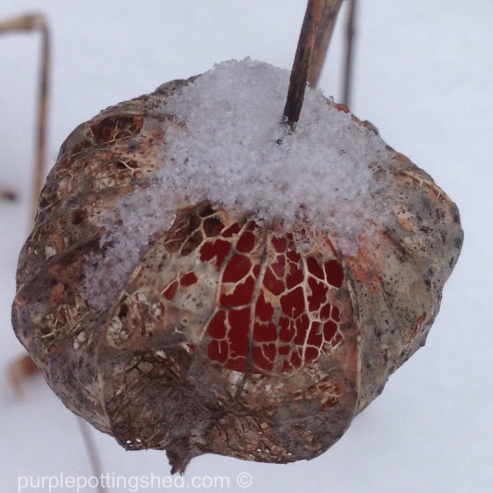 Chinese lantern with snow.jpg