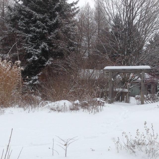 Snowy arbour garden.jpg