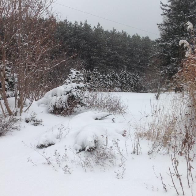 Snowy front garden.jpg