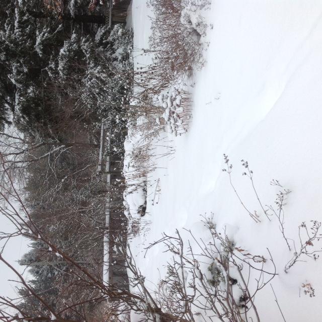 Snowy side garden.jpg