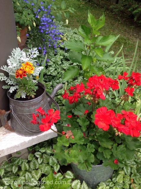 Teakettle with annuals.jpg