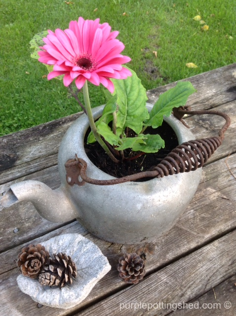 Teakettle with gerbera.jpg