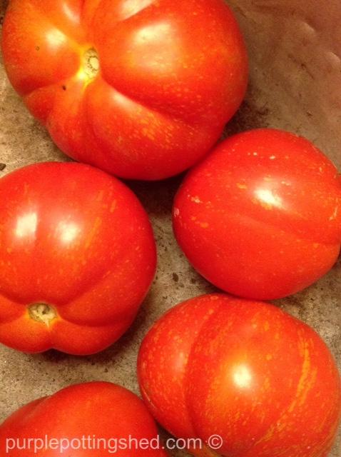 Tomatoes 4.jpg