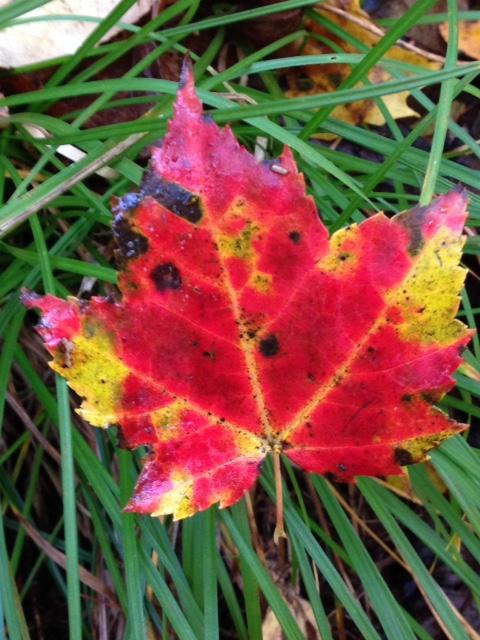 Fall colour 1.jpg