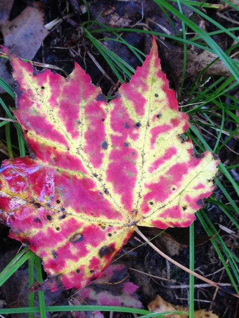 Fall colour 2.jpg