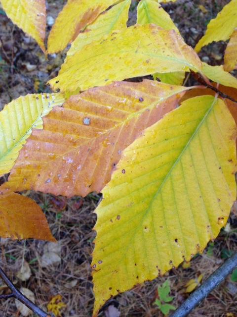Fall colour 4.jpg