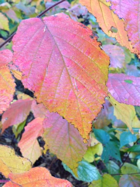 Fall colour 3.jpg