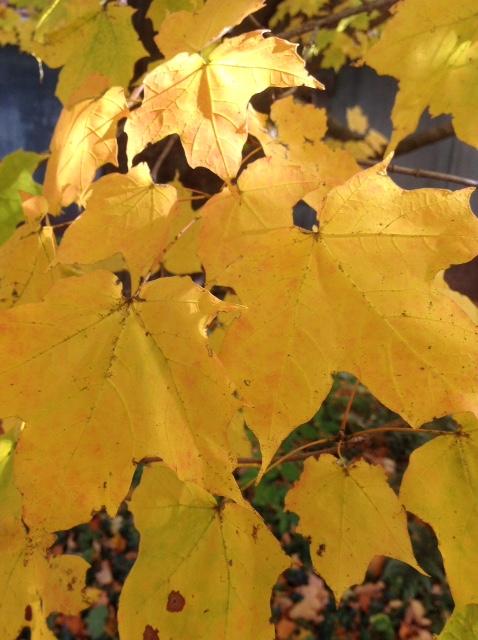 Fall colour 5.jpg