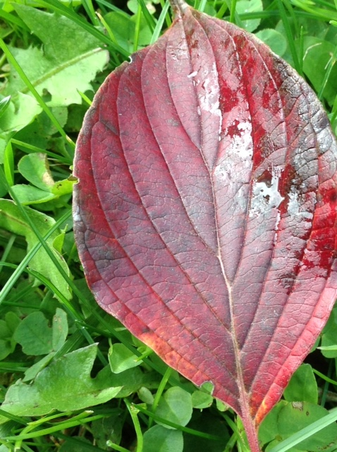 Fall colour 7.jpg