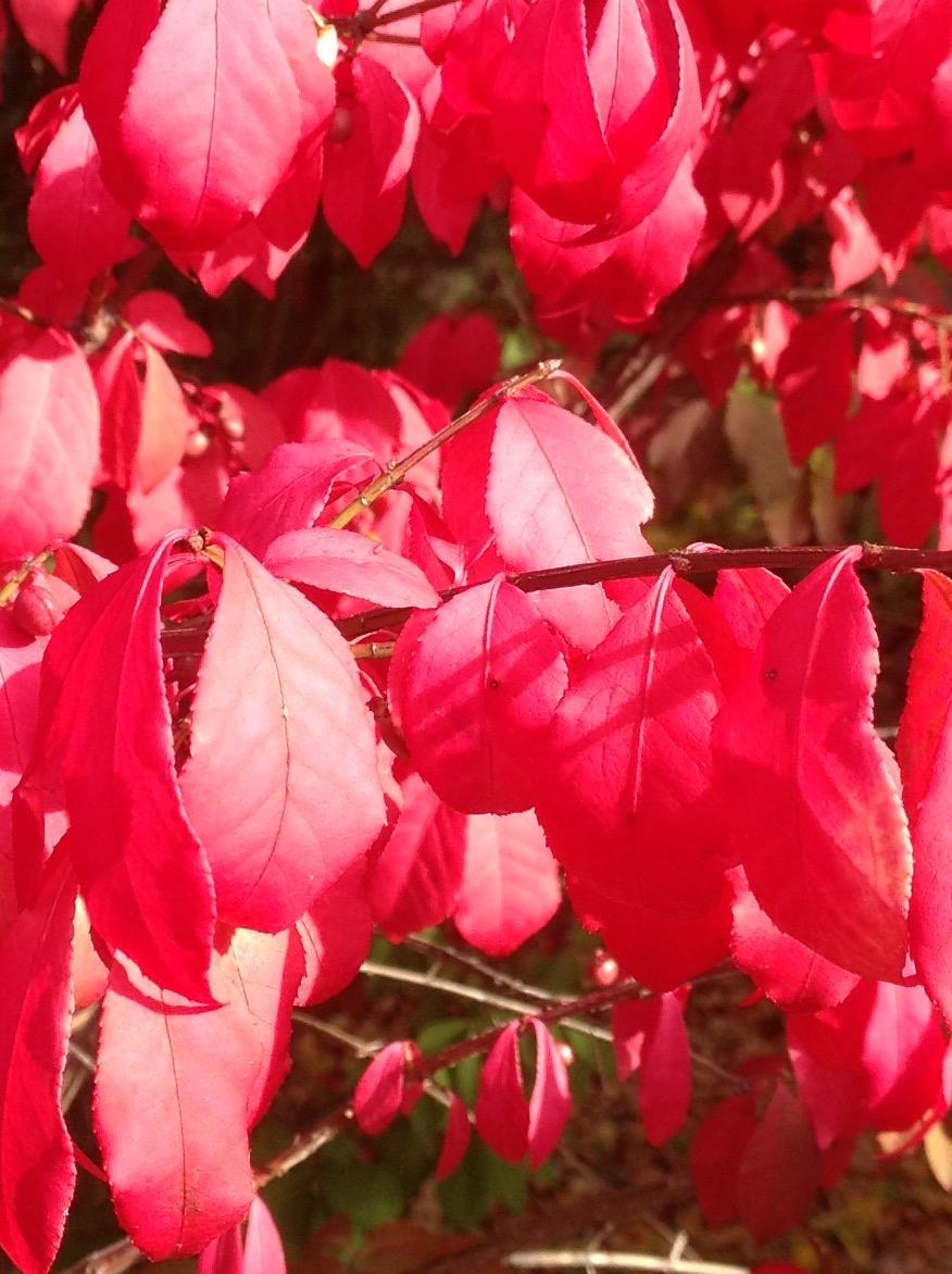 Fall colour 6.jpg