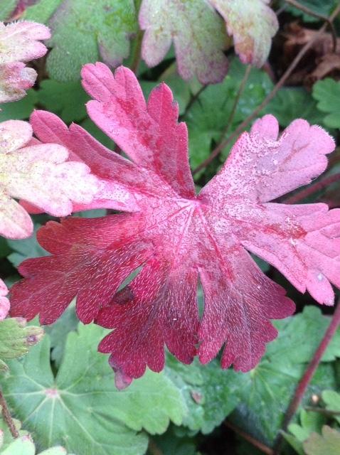 Fall colour 10.jpg