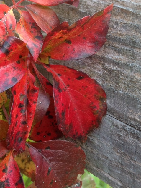 Fall colour 11.jpg