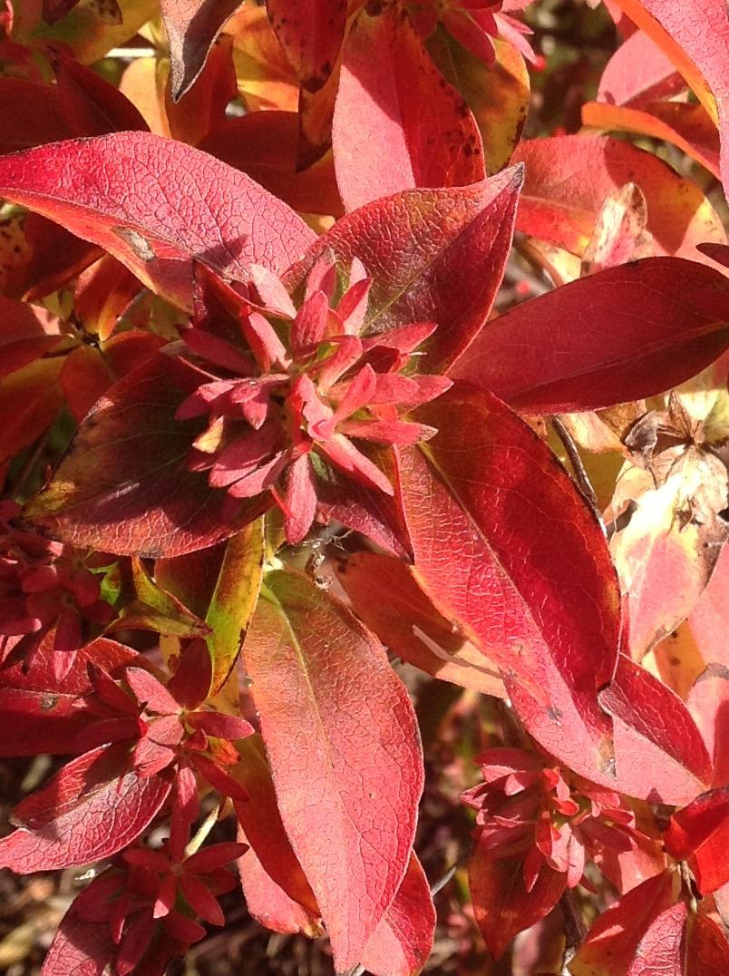 Fall colour 9.jpg