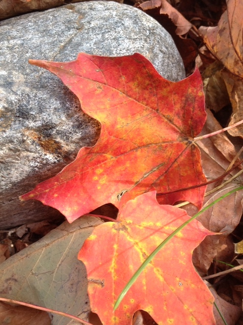 Fall colour 12.jpg